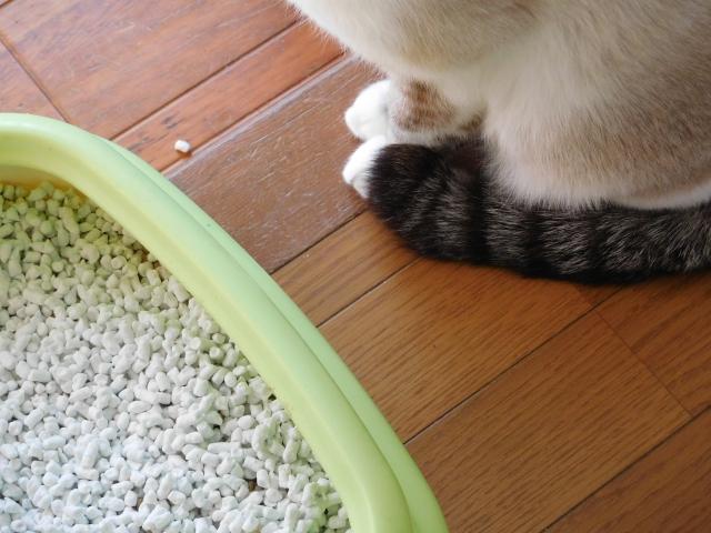 子猫 トイレ 失敗