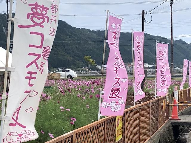 亀岡 夢コスモス園